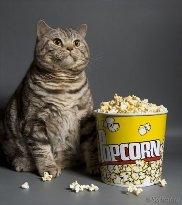 fat-cat-with-popcorn