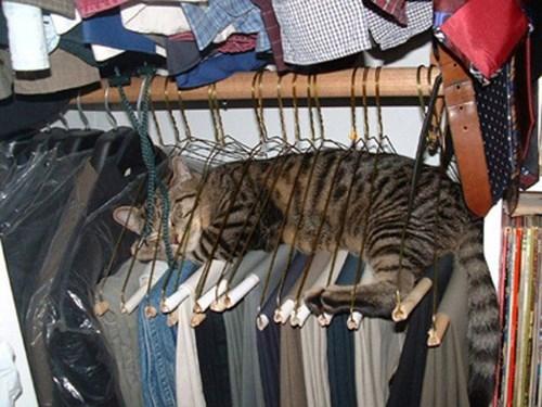 hanger sleeping cat
