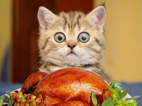 Can I haz some turkey Plz