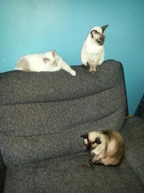 cats-Fatty-Mischief-Monster