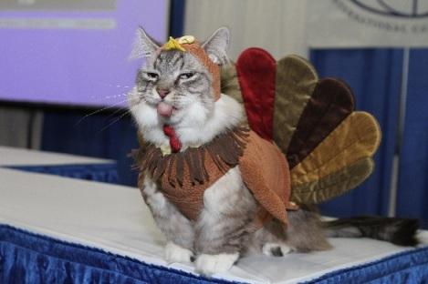 Turkey-Cat1