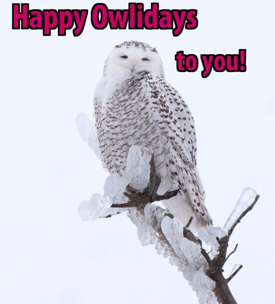 Happy Owlidays!