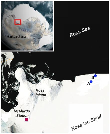 anemone site