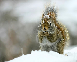 cold+squirrel