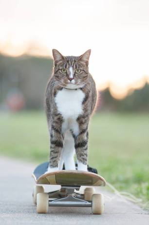Didga-the-Skateboarding-Cat