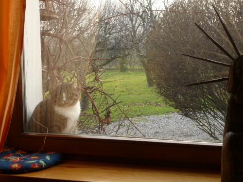 Hili at window