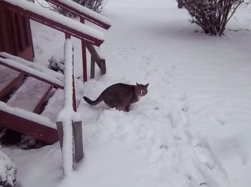 Hili considers the snow