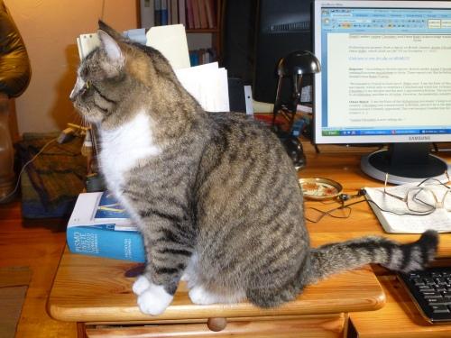 Hili supervising