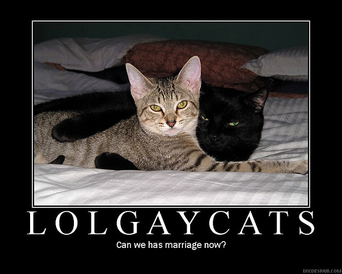 how to tell if your cat is gay