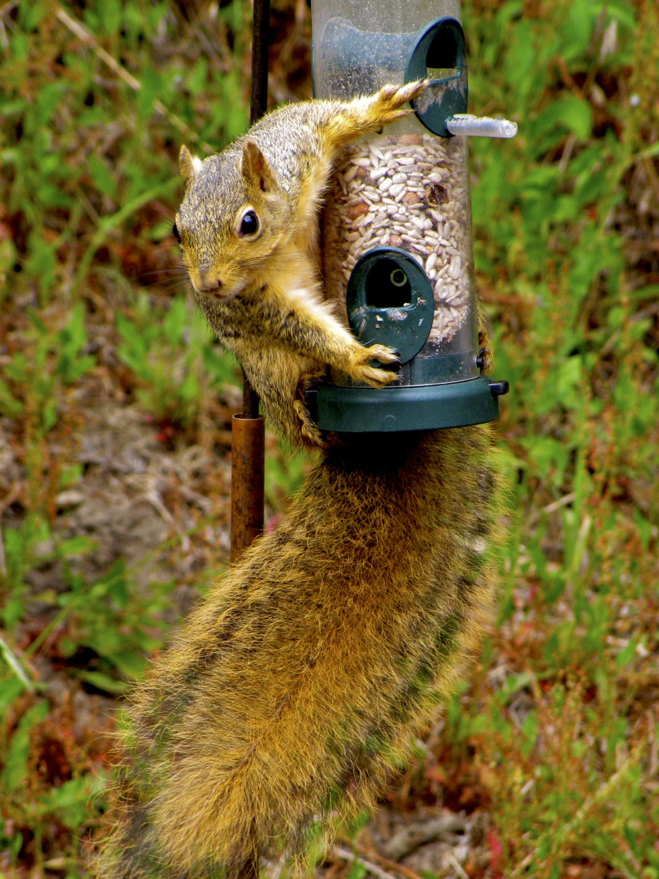 cages wild feeder proof squirrel feeders bird