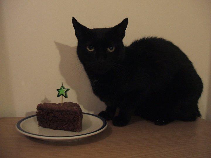 cat shame 2