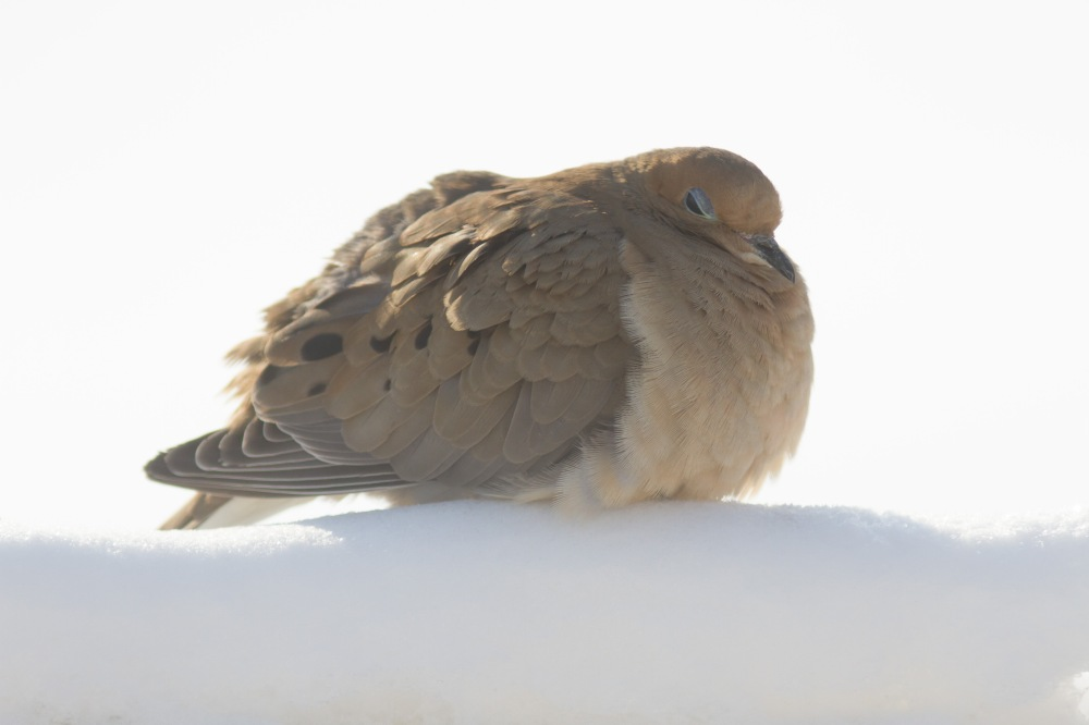 Chilly Dove Has Had Enough