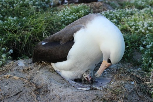 albatross-oldest-bird-e1393001392992