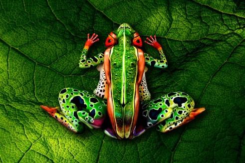 frog-johannes-stoetter_2-1024x682