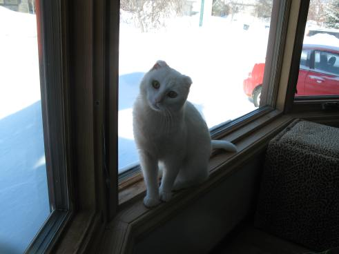 Gus in the window