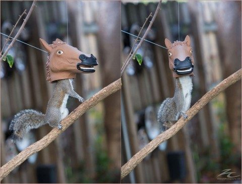 horse-head-squirrel-feeder-930x709-480x365