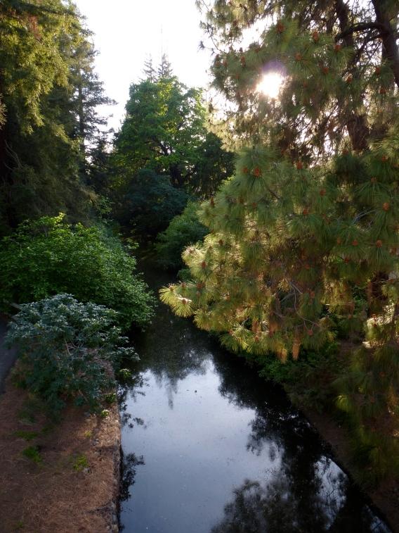 Davis Putah Creek