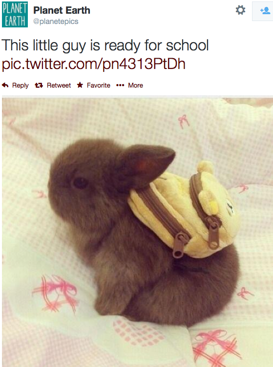 Image of: Newborn Picture Why Evolution Is True Wordpresscom Baby Rabbit With Backpack Why Evolution Is True