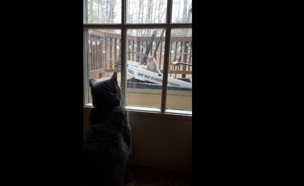 "'Squirrel Television' Wrote Kim O'Keefe: ""Our three-legged cat, Patrick Swayze, catches the latest episode of 'Squirrel Television' from our deck."""