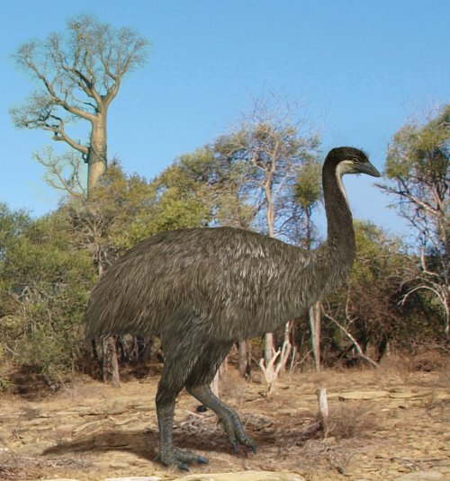 Artist's reconstruction of an elephant bird (New York Times).