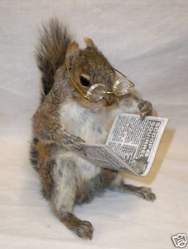 Squirrels with glasses - photo#12