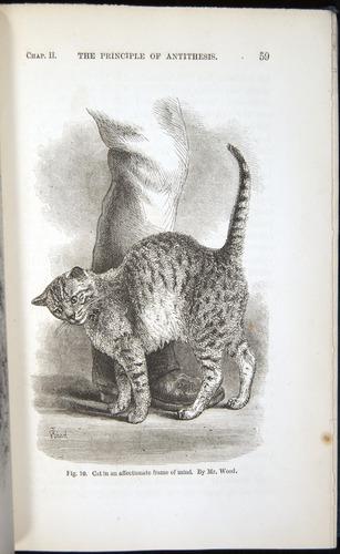 Darwin-F1142-1872-059