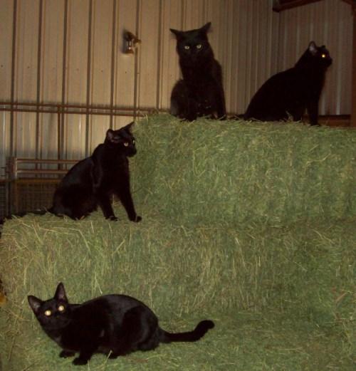 haystack4