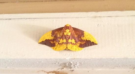 jesus-in-moth