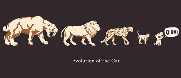 Evolutionary History Of House Cats