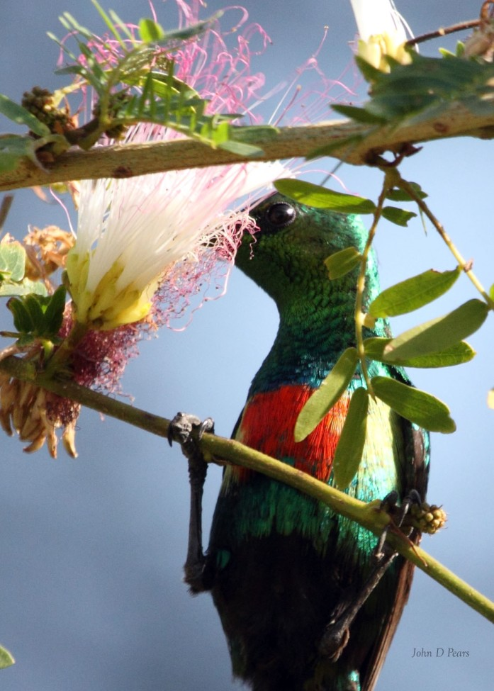 3 Beautiful Sunbird