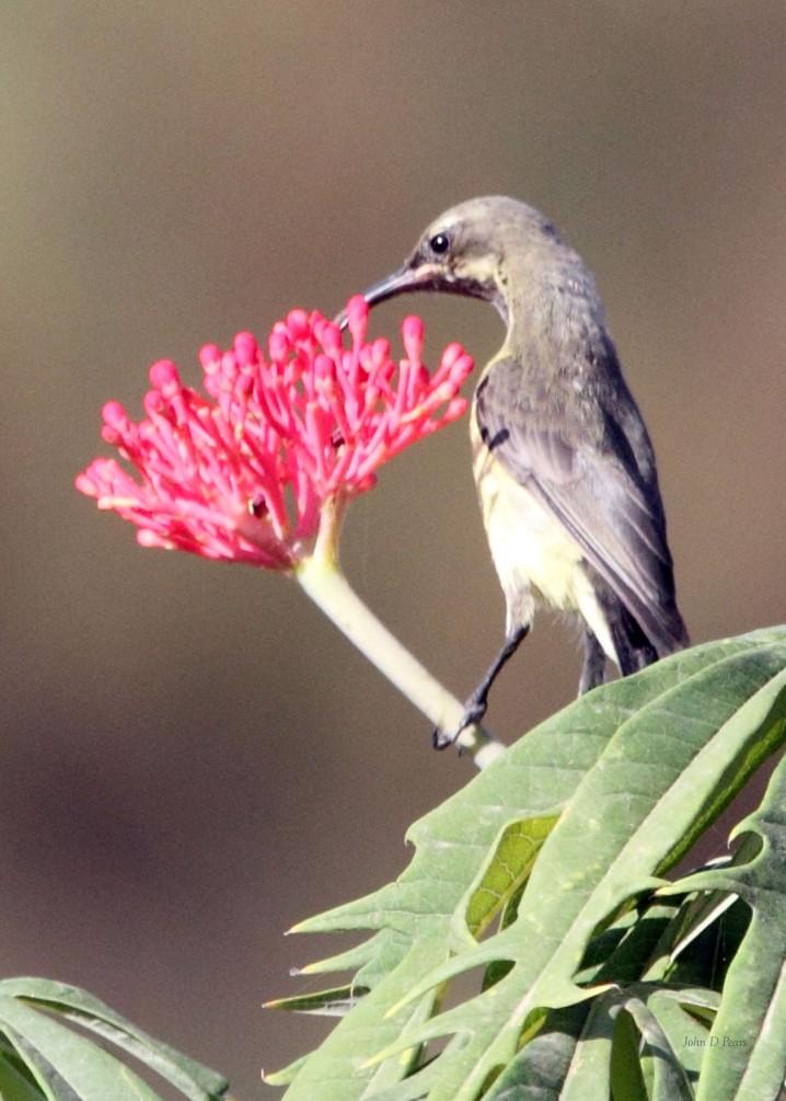 4 Beautiful Sunbird