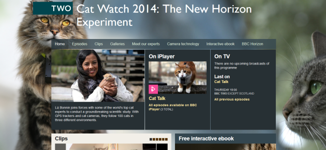 Cat watch 2014