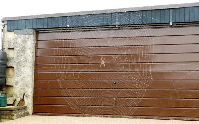 potd-spider-web_3063143k