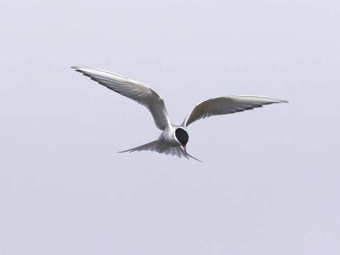 Tern2
