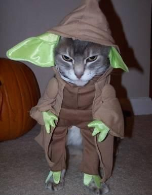 Yoda-Cat-Halloween-Costume.png « Why Evolution Is True