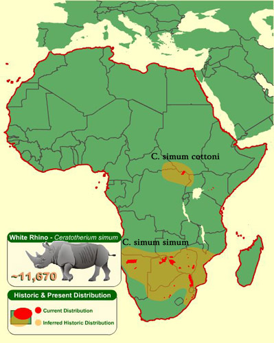 Distribution of the white rhino, from the San Diego Zoo.