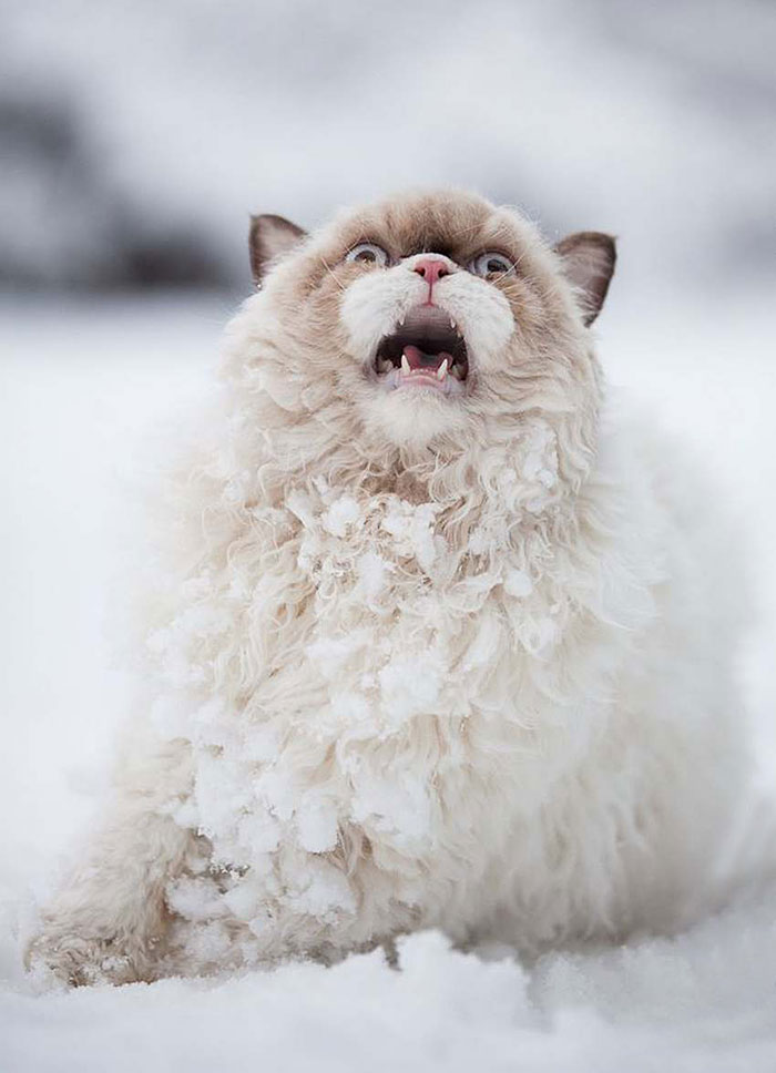 snow animals cat persian funny cats meme kitty sees stuff