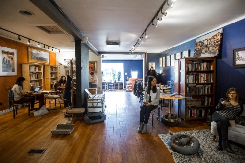 The interior of the Denver Cat Company, by Danielle Liriette, Cafe Society, Denver Westword.