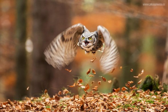 owl-photography-13__880