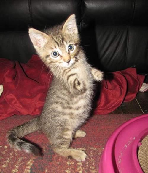 smart cat ultimate scratching post