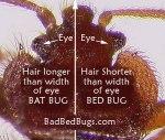 batbug