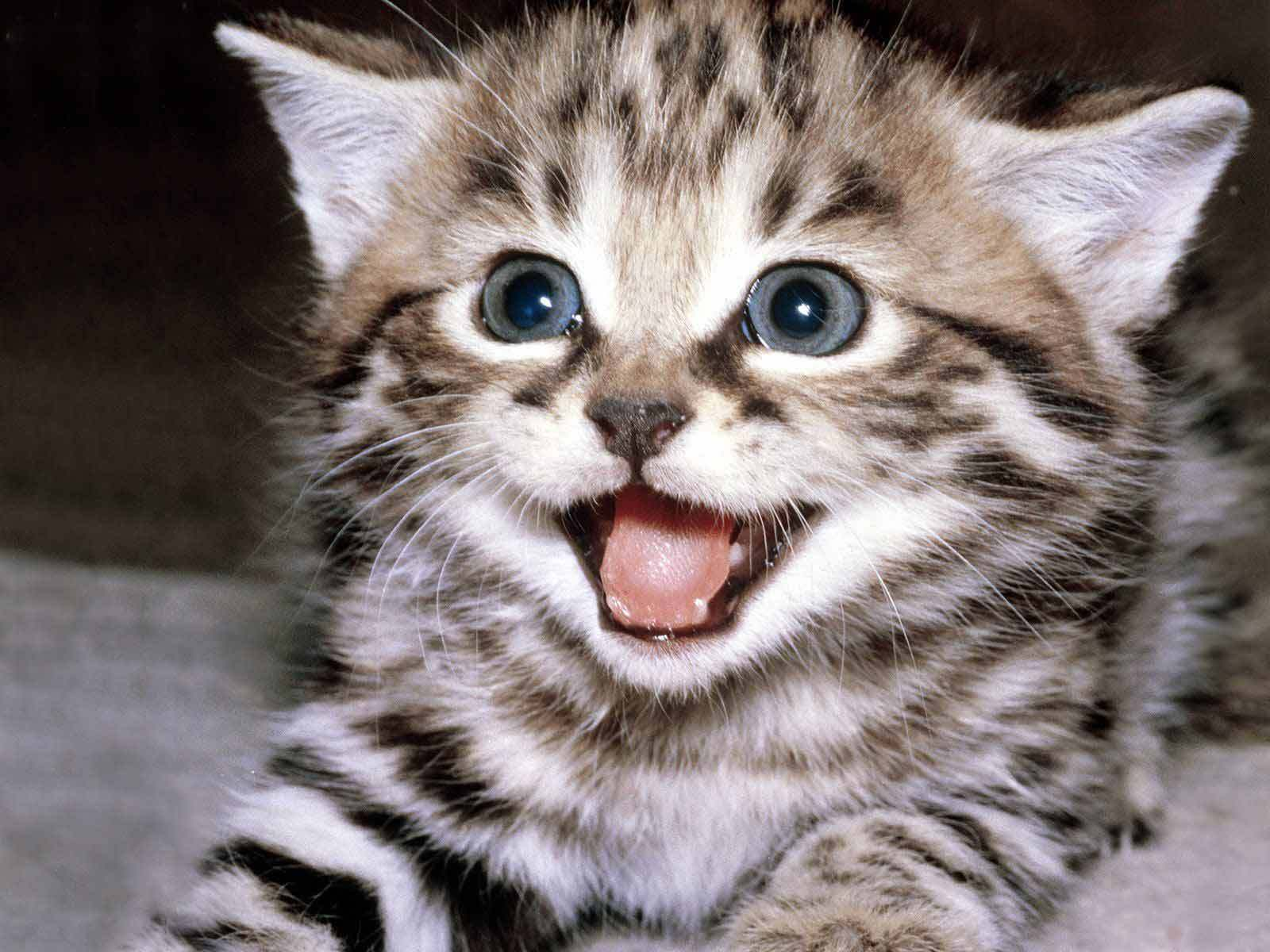 Cute-kittens-12929201-1600-1200 « Why Evolution Is True