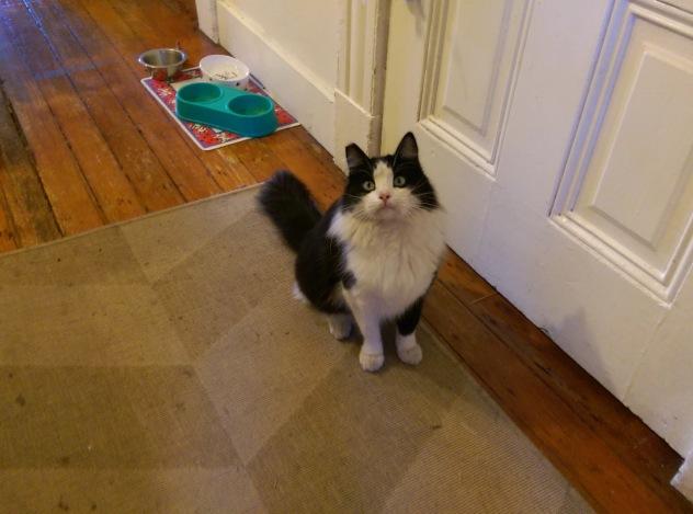 Surprise Cat (2)