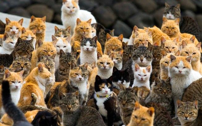 potd-cats_3217674k