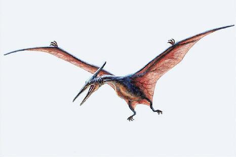 focus_pterosaur2