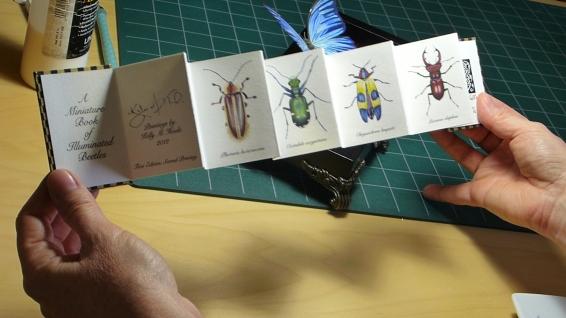 Beetle book