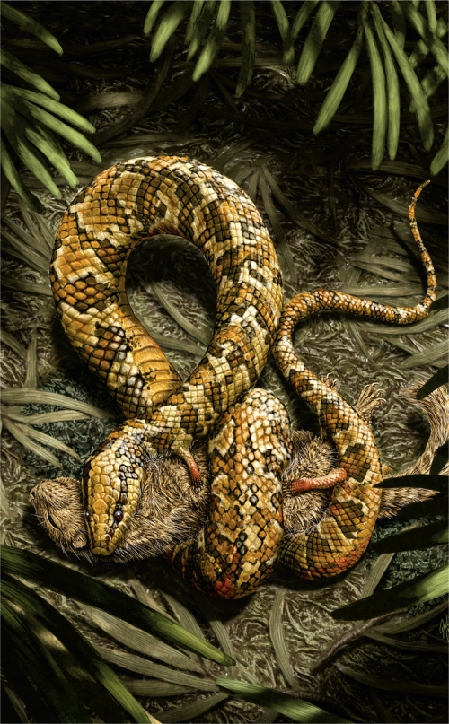 Tetrapodophis constricting and eating a small mammal, reconstruction by Julius Cstonyi.