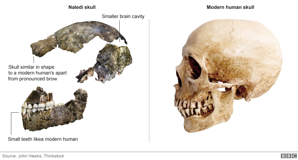 The dmanisi fossils were dating using nails