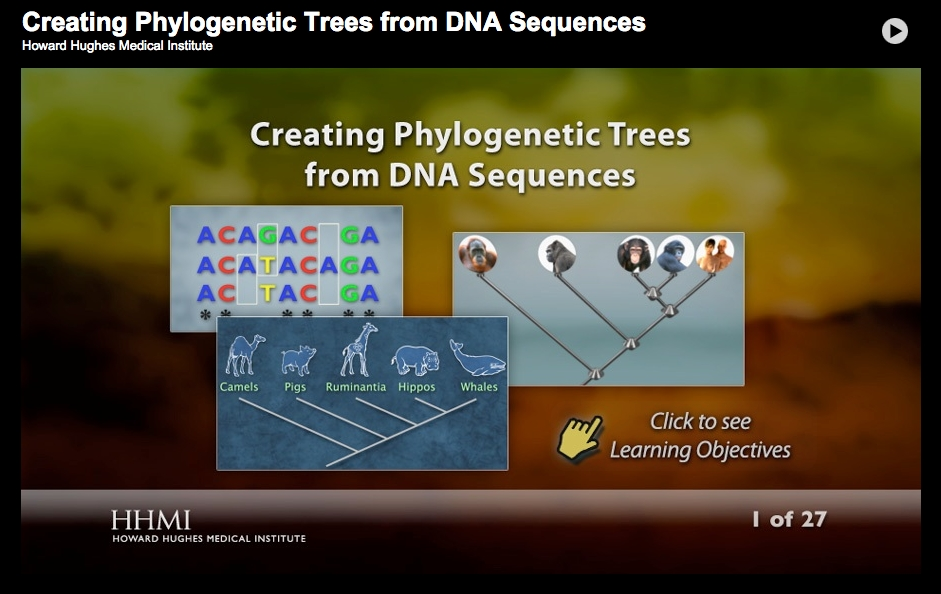 How Do We Use Dna To Make Evolutionary Trees Why