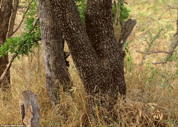 Spot The Hidden Animals 20 Opportunities Why Evolution Is True